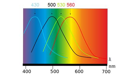 Spectrophotometry